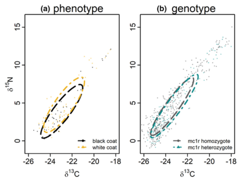 Figure 2 chart comparing phenotype and genotype foraging niche variations.