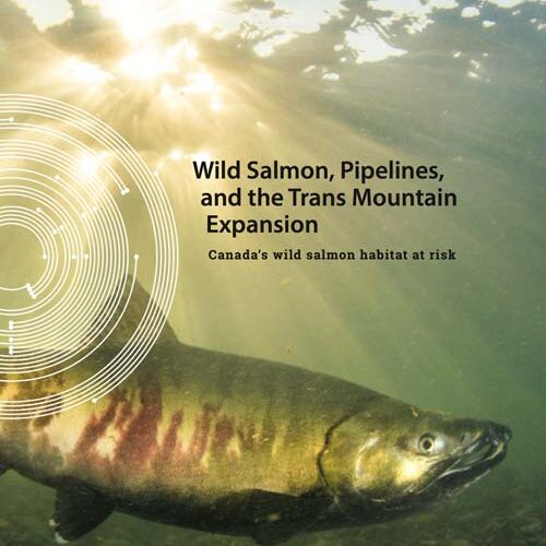 Report cover: Wild Salmon, Pipelines, and the Trans Mountain Expansion: A salmon in the Fraser River, with sunlight streaming in behind.