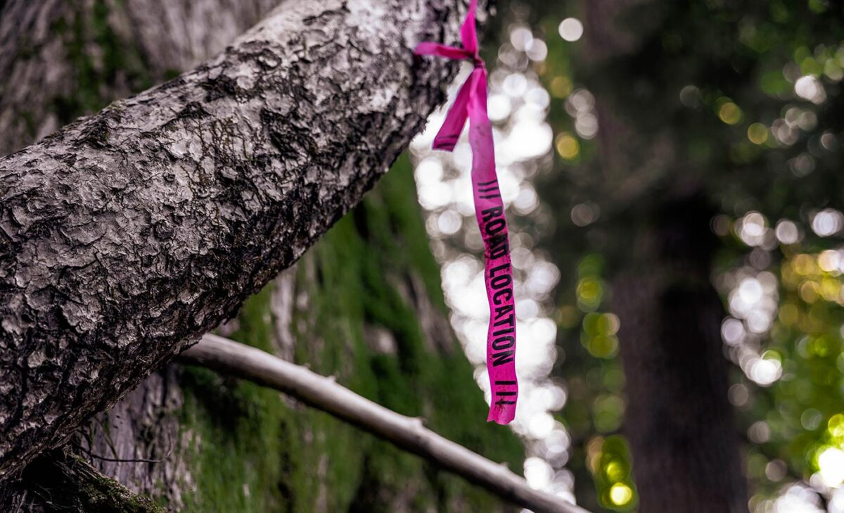 Photo of road location tape tied around a tree.