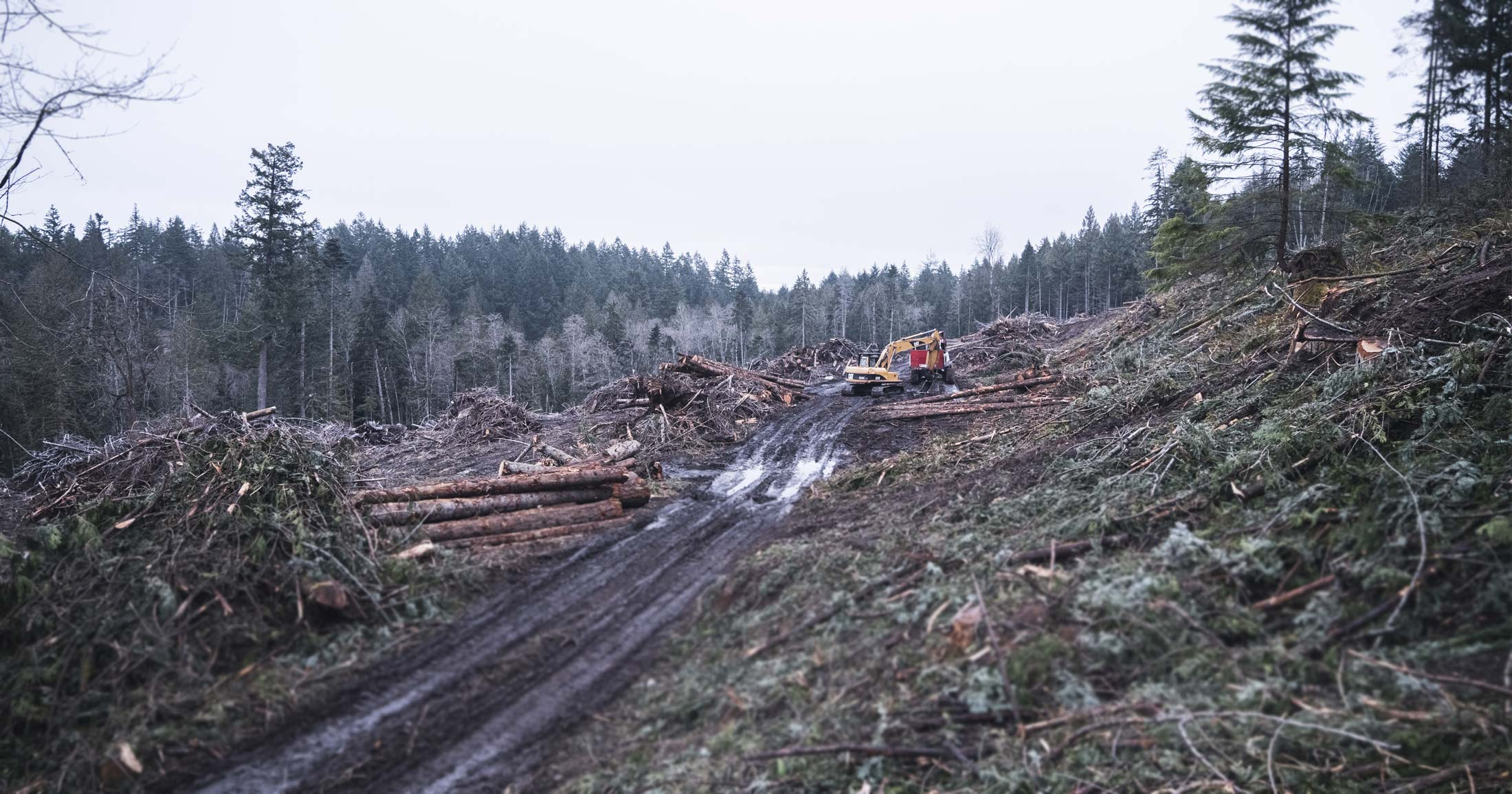 A cutblock covered in cut trees and muddy roads with a large digger on the Gulf Islands.