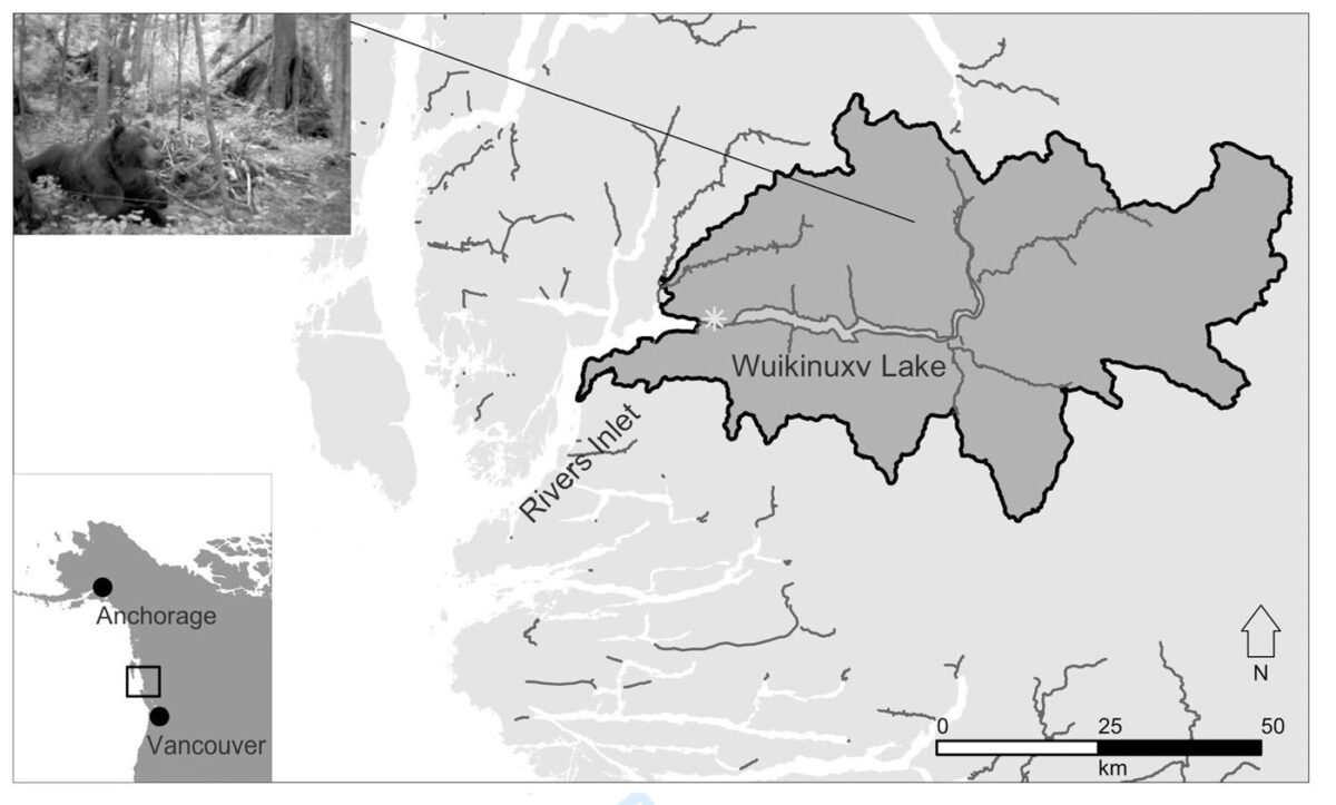 Map of Wuikinuxv Lake watershed and neighbouring watersheds.