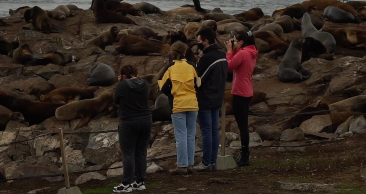 Four students standing on a rock viewing a lot of sea lions.