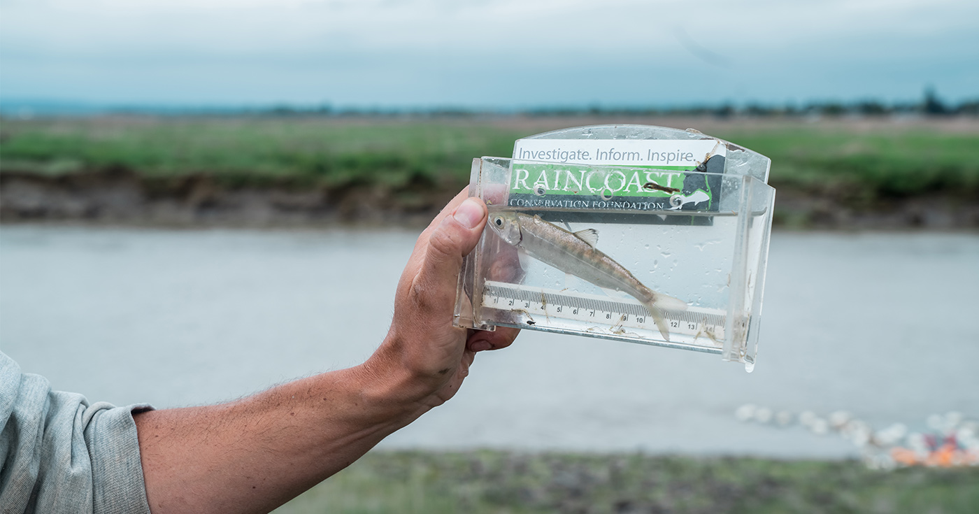 Salmon smolt in a viewfinder being held up by a hand with the Fraser River in the background.