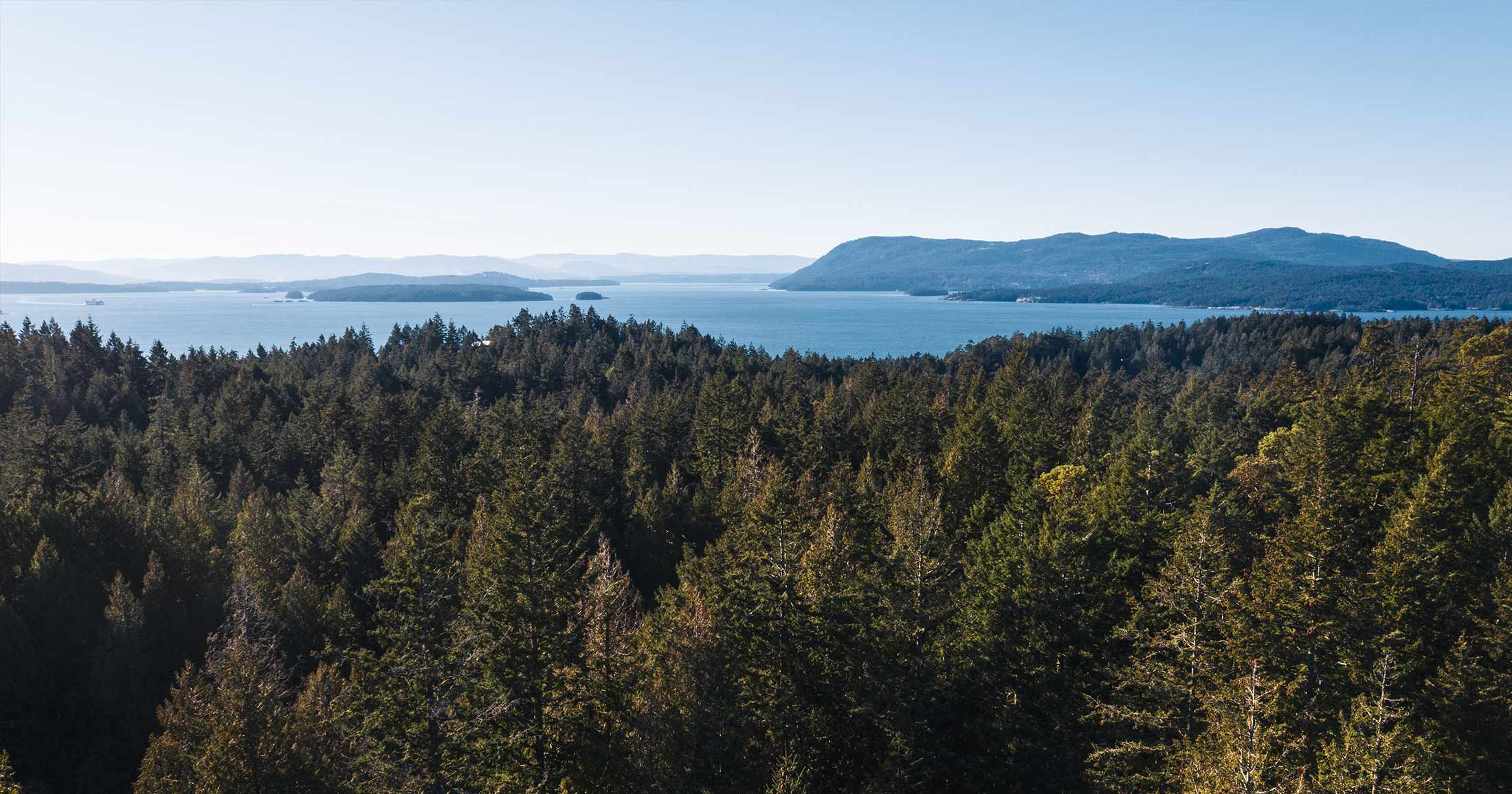Drone photo of an intact forest with the ocean in the background on a sunny day.