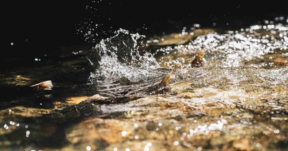 Healthy Waters Program