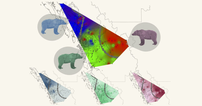 Spatial alignment between grizzly bear genetic groups and Indigenous language families in coastal BC