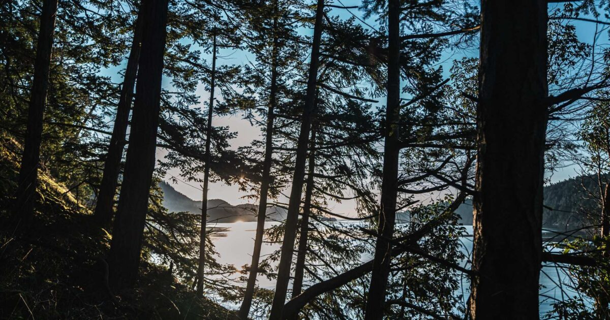Twilight on a gulf island in a mossy forest with ocean and mountains in the distant background.