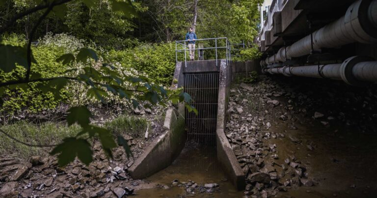 Up to 85 percent of historical salmon habitat lost in Lower Fraser region