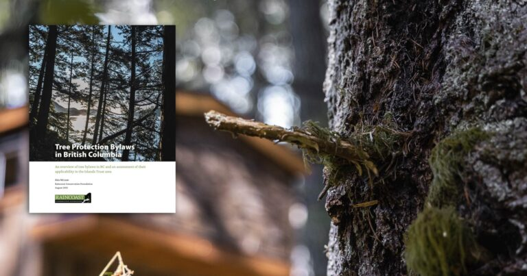 Report: Tree Protection Bylaws in British Columbia