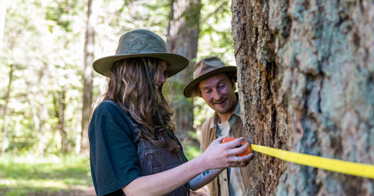 Interview: Big tree registries, BC's logging practices and Nerdy about Nature