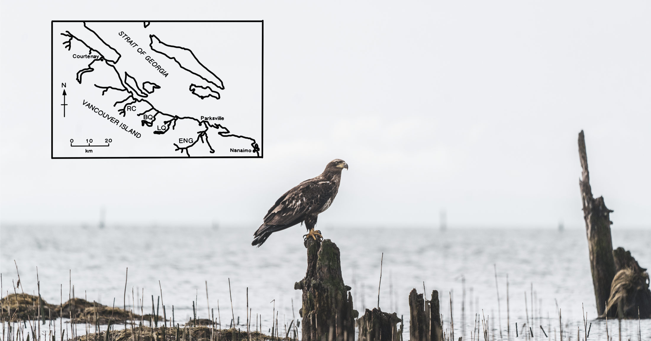 An eagle rests on a log with a map in the background.