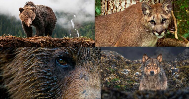 A collage of images for One Shot for Coastal Carnivores.